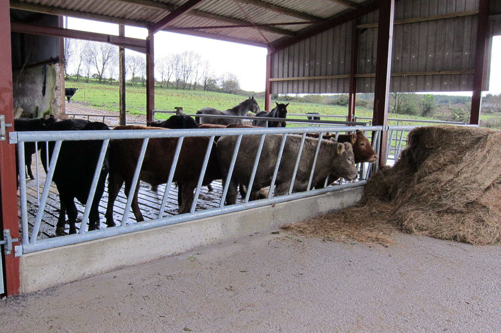Cattle Feed Barriers Allenweld Quality Equestrian And