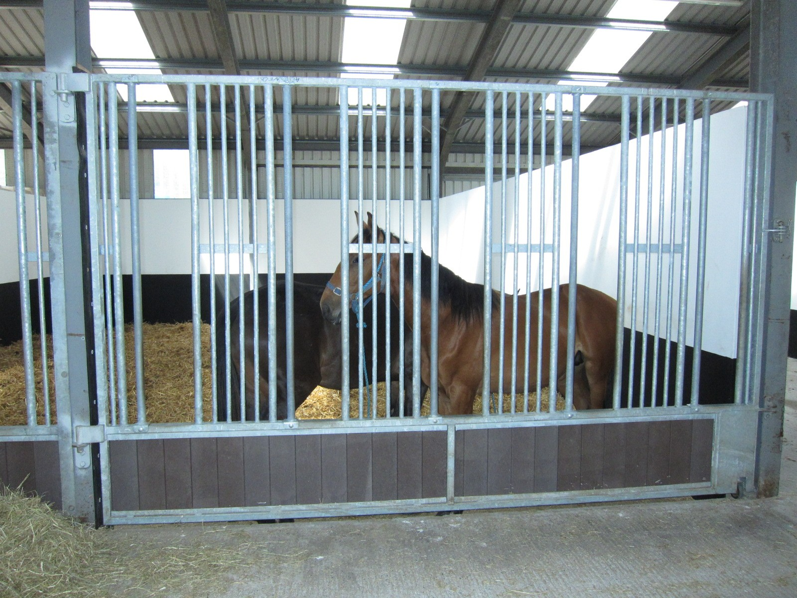 Indoor Horse Stables Allenweld Quality Equestrian And