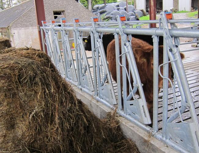 Headlock / Feed barriers